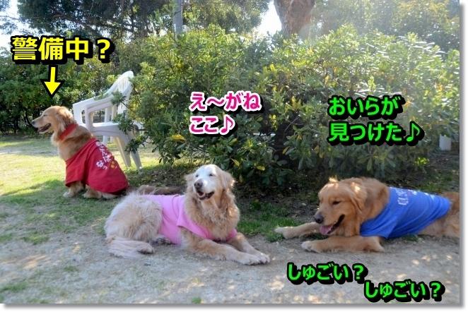 DSC_3254_20140502011314f0f.jpg
