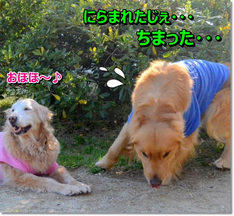 DSC_3255_201405020111219dc.jpg