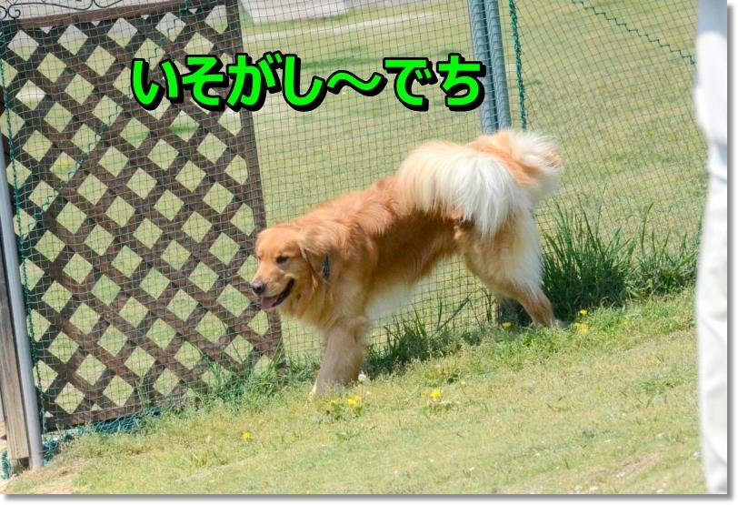 DSC_3260_2014050311234016b.jpg