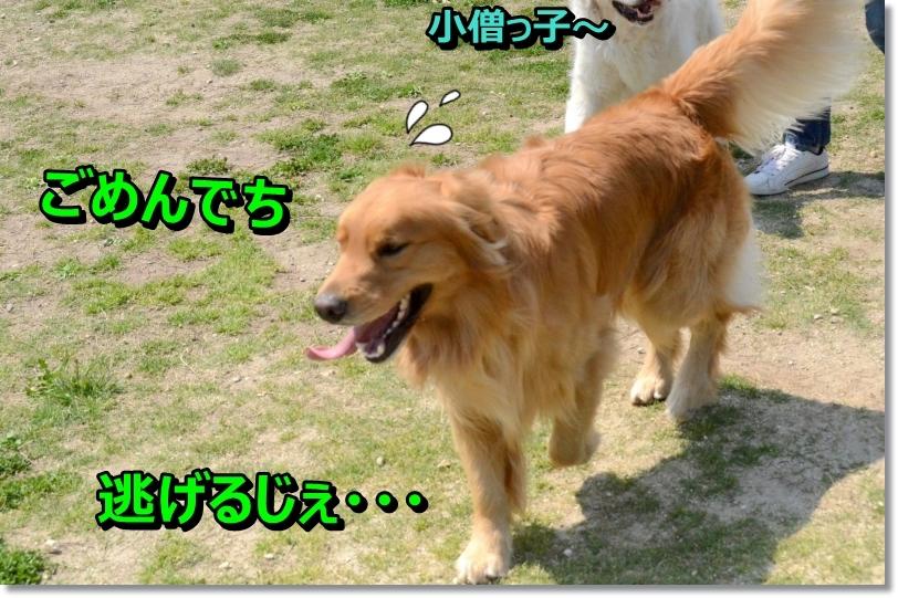 DSC_3294_2014050311243143a.jpg
