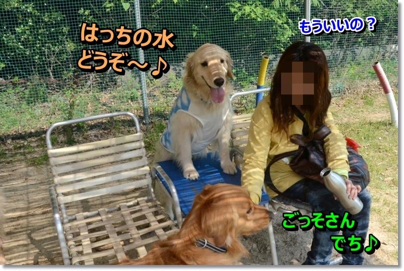 DSC_3308_20140506071041b74.jpg