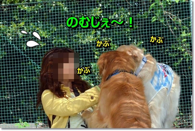 DSC_3316_20140506071056dbd.jpg