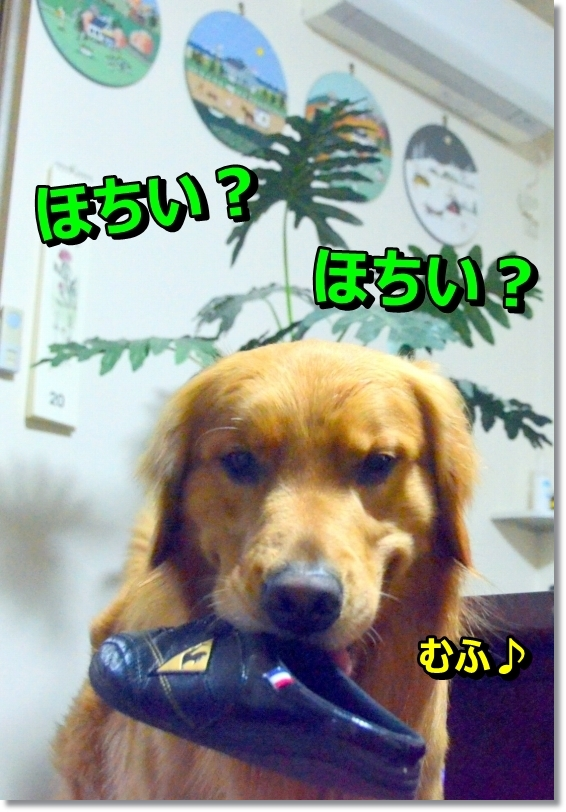 DSC_3384_2014060712561514e.jpg