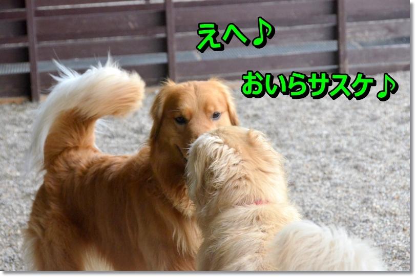 DSC_3410_20140515090740314.jpg