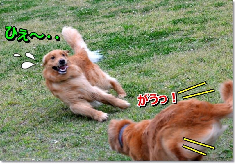 DSC_3582_2014051711105534d.jpg