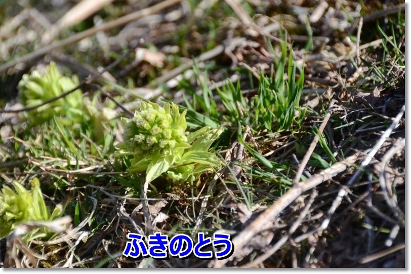 DSC_3722.jpg