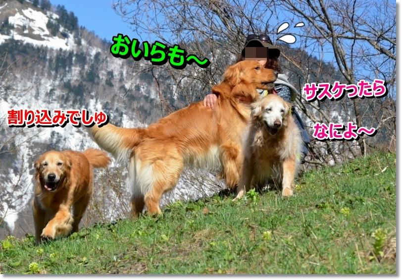DSC_3783_2014050923293300d.jpg