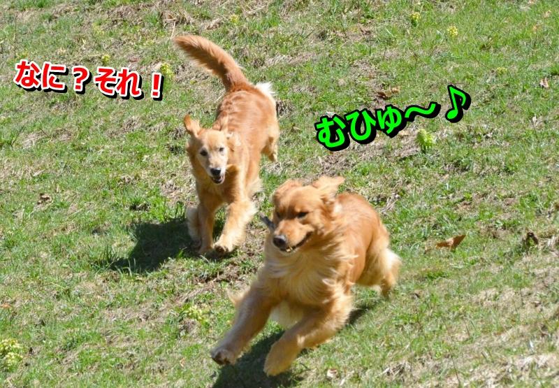 DSC_4022_20140509233253361.jpg