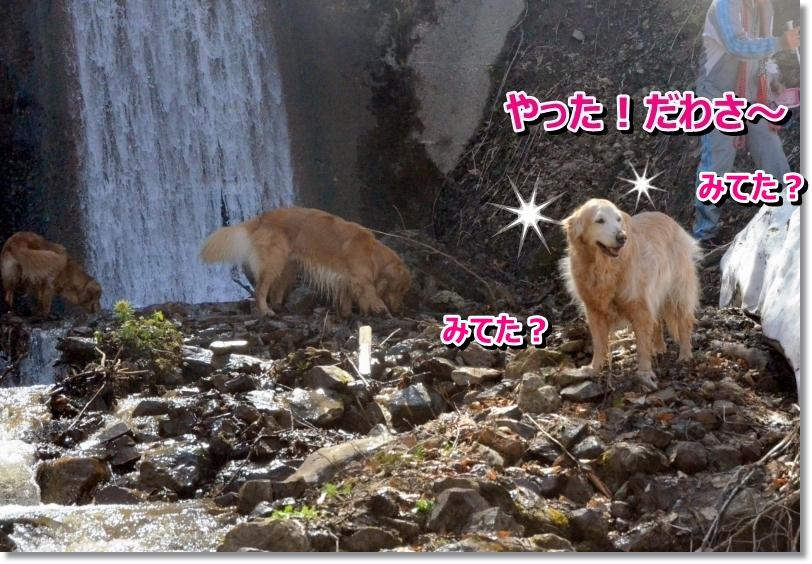 DSC_4121_20140511085448a11.jpg