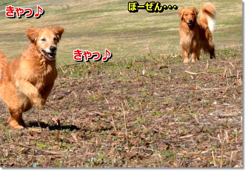 DSC_4187_201405110855074d6.jpg