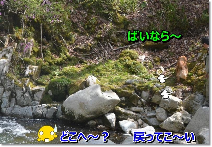DSC_4533_20140513084916a66.jpg
