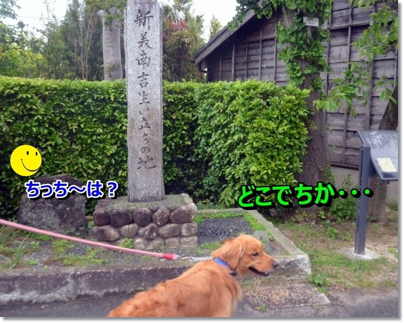 DSC_4583.jpg