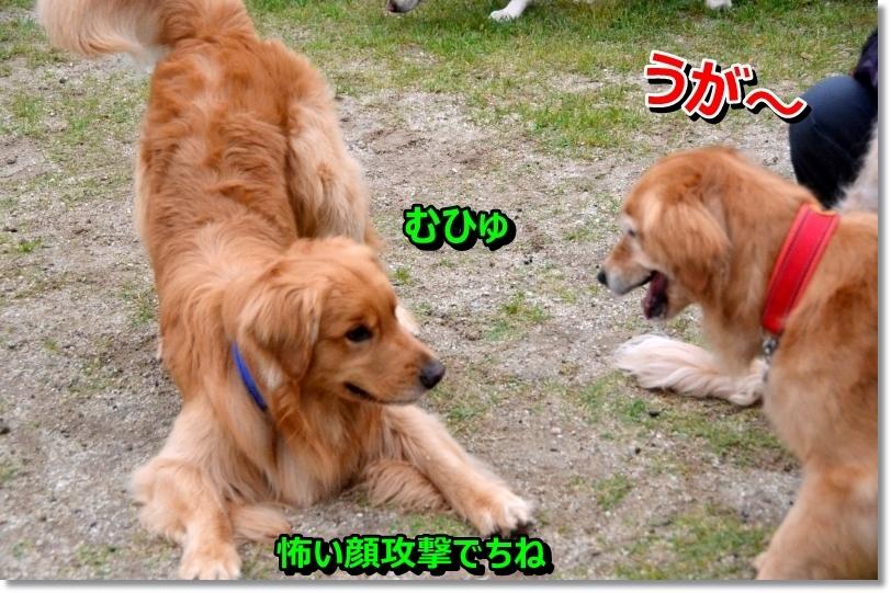 DSC_4709_20140530101251c89.jpg
