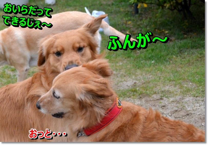 DSC_4710_2014053010125291a.jpg