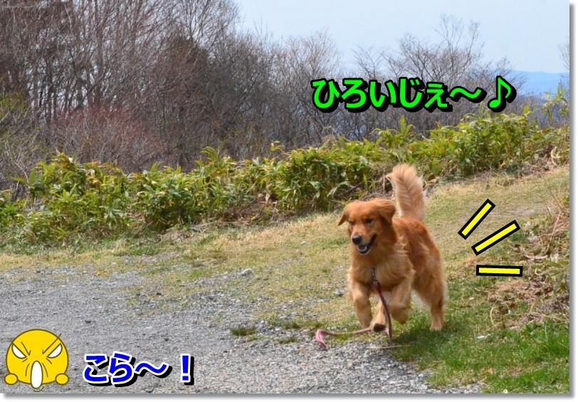 DSC_4803_20140523163250a52.jpg