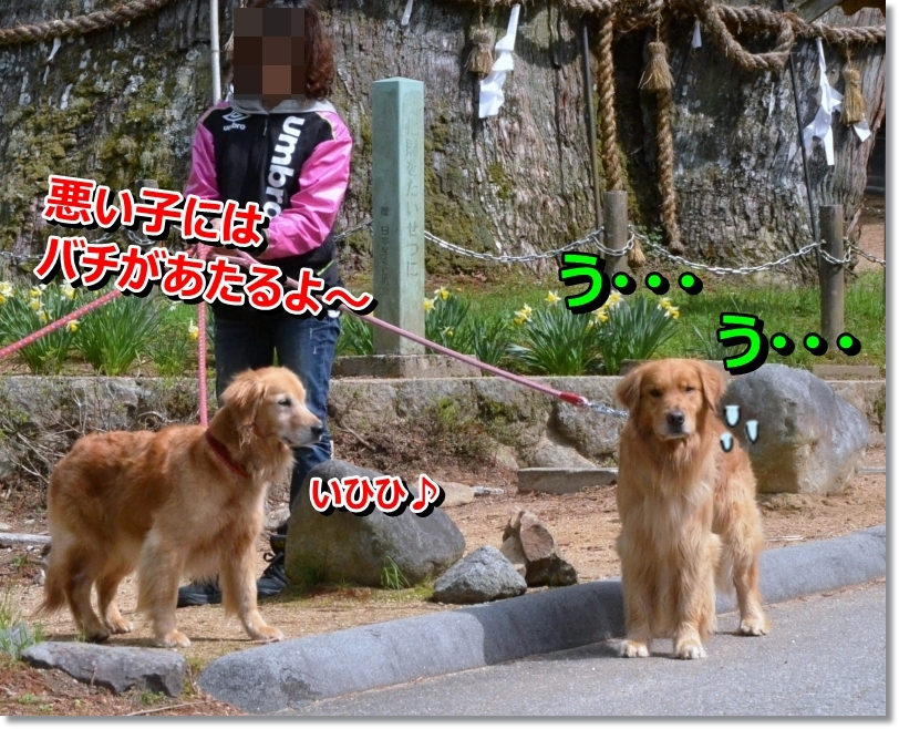 DSC_5254_20140525092649722.jpg