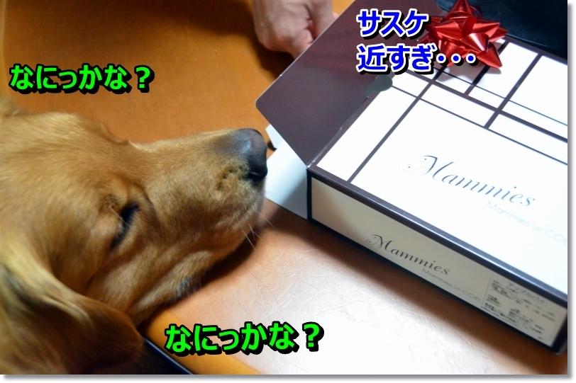 DSC_5298_20140514104925cff.jpg