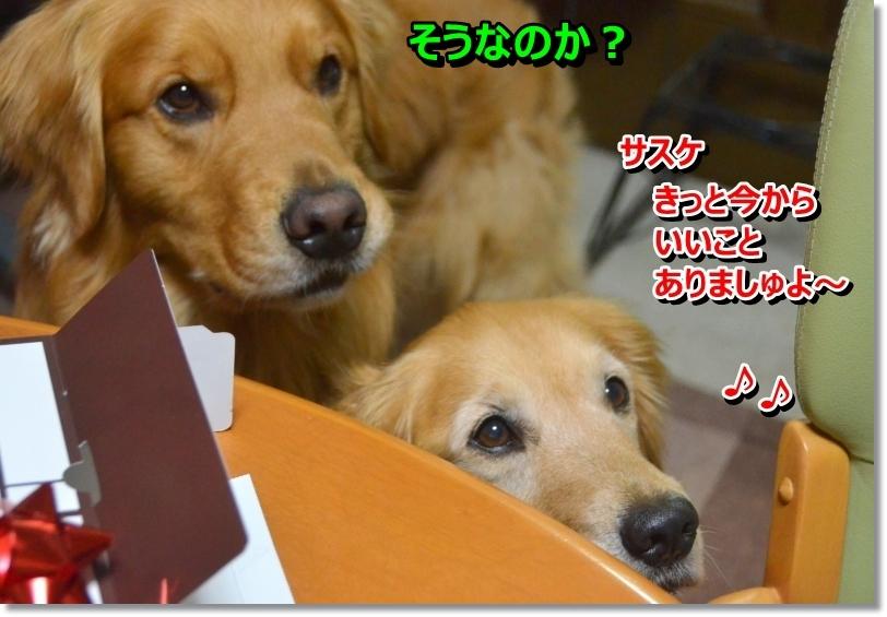 DSC_5308_20140514104947b10.jpg