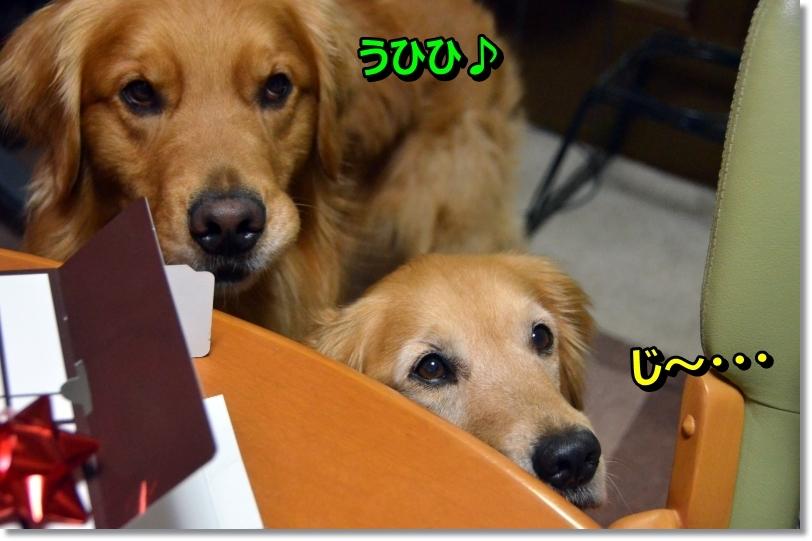 DSC_5310_201405141049493f2.jpg