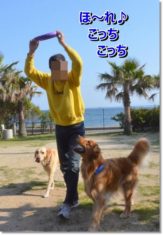 DSC_5385_20140527011229e3e.jpg