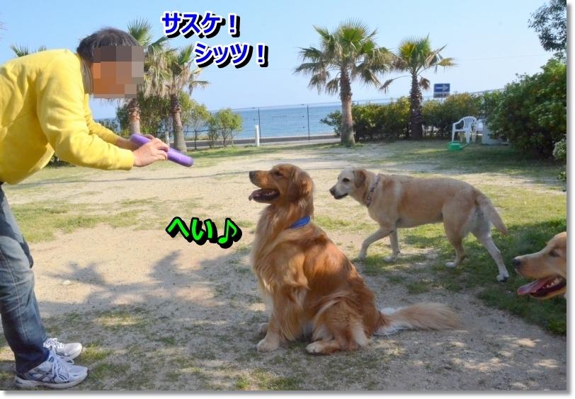 DSC_5388_20140527011231326.jpg