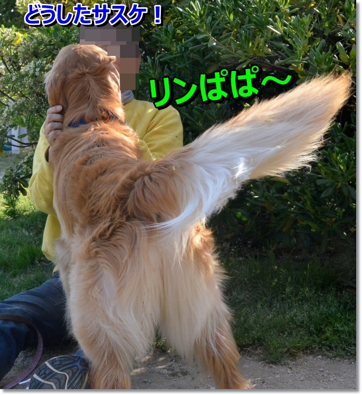 DSC_5404_20140527011301108.jpg