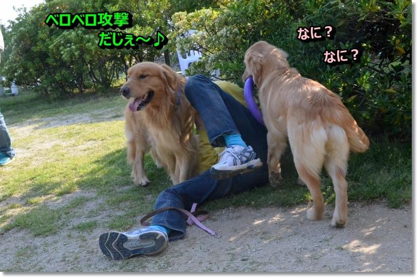DSC_5407_2014052701130403c.jpg