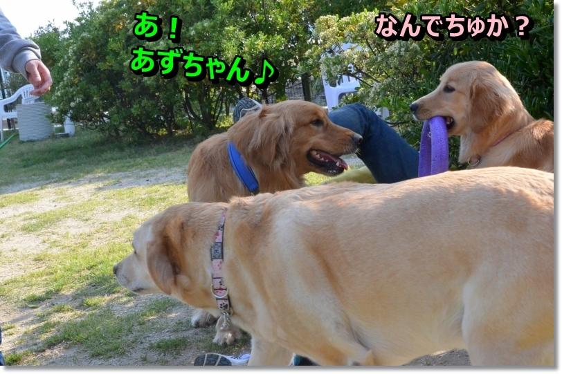 DSC_5408_20140527011305fbd.jpg