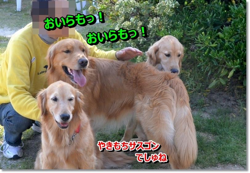 DSC_5450_201405281128178c3.jpg