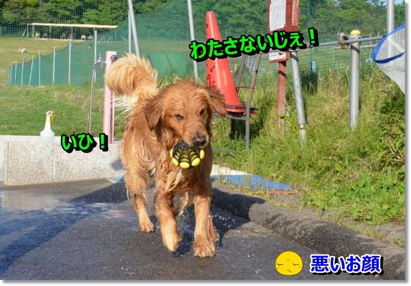 DSC_5825_20140614123104e8b.jpg