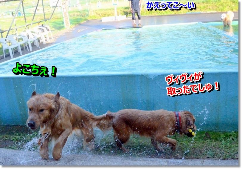 DSC_5939-1.jpg