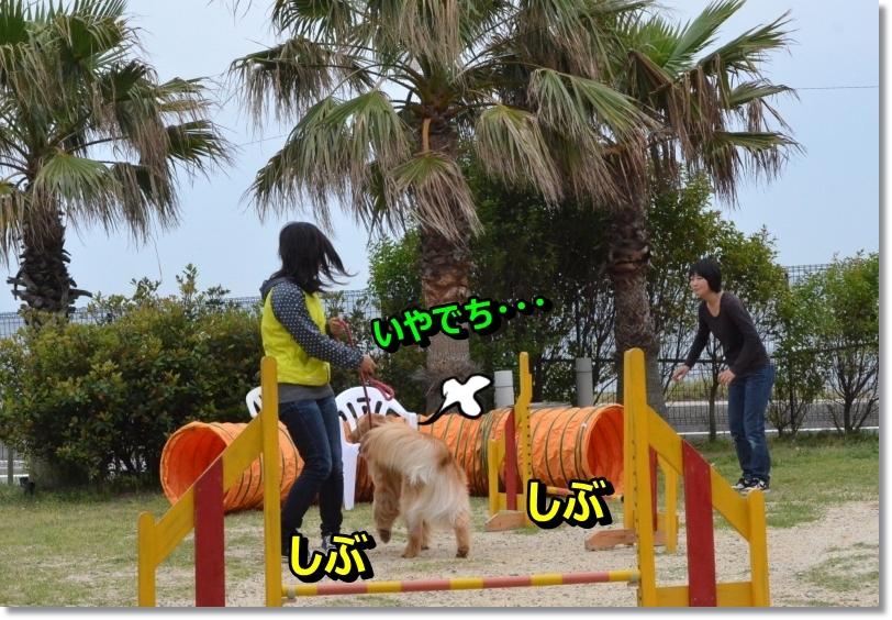 DSC_6129_2014061008393209d.jpg