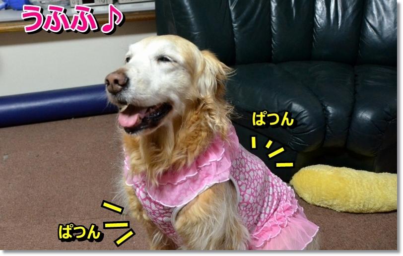 DSC_6418.jpg