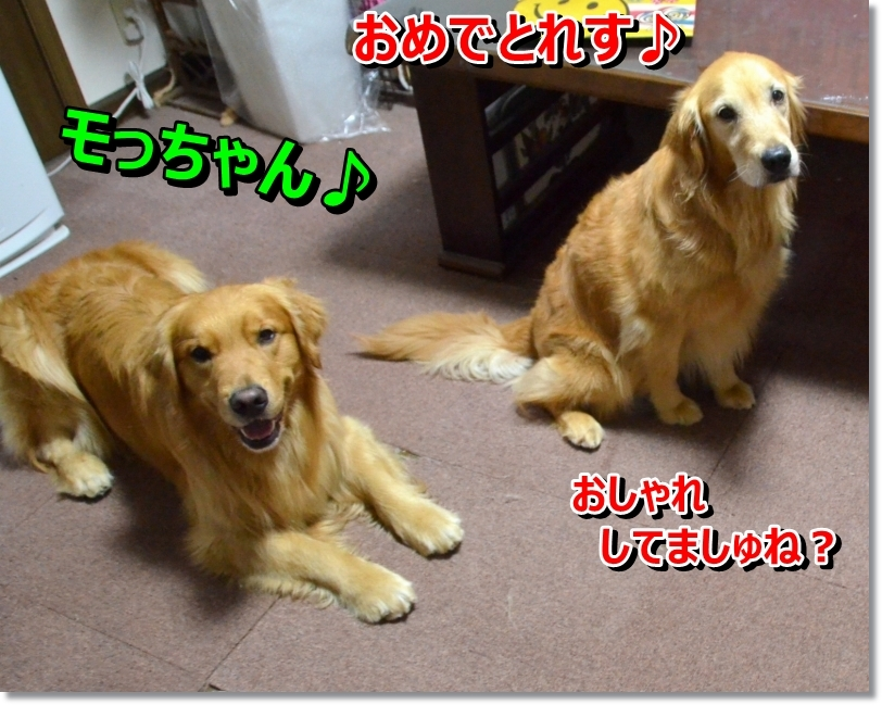 DSC_6445.jpg