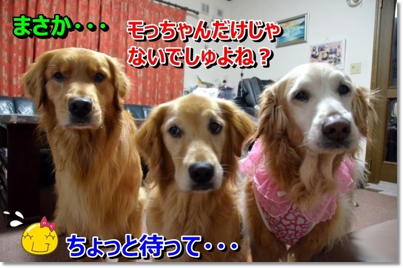 DSC_6452_20140522103238cc4.jpg