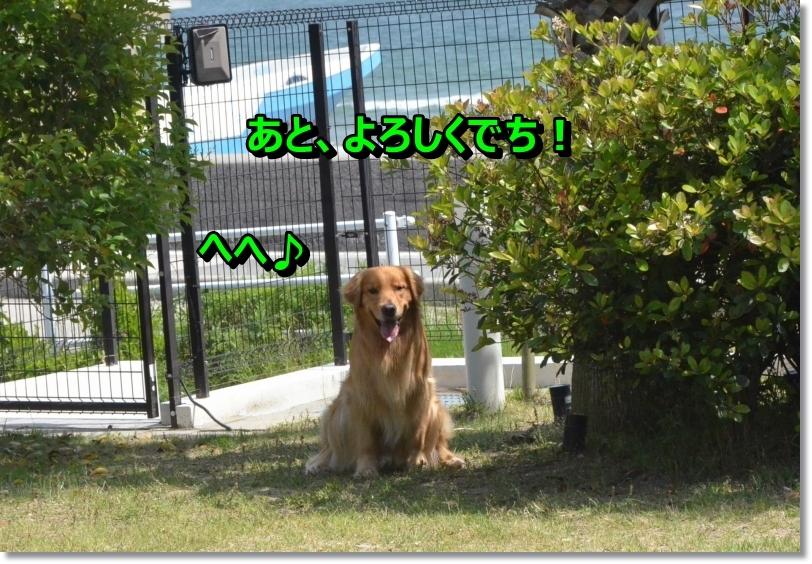 DSC_6486_201406181053479aa.jpg