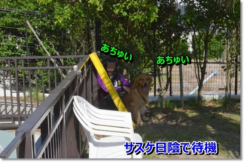 DSC_6517.jpg