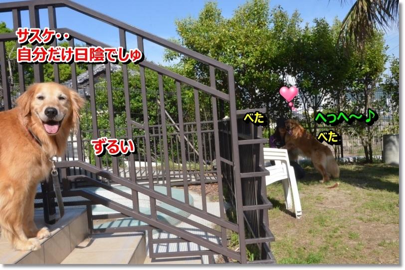 DSC_6591_20140618105434b9a.jpg