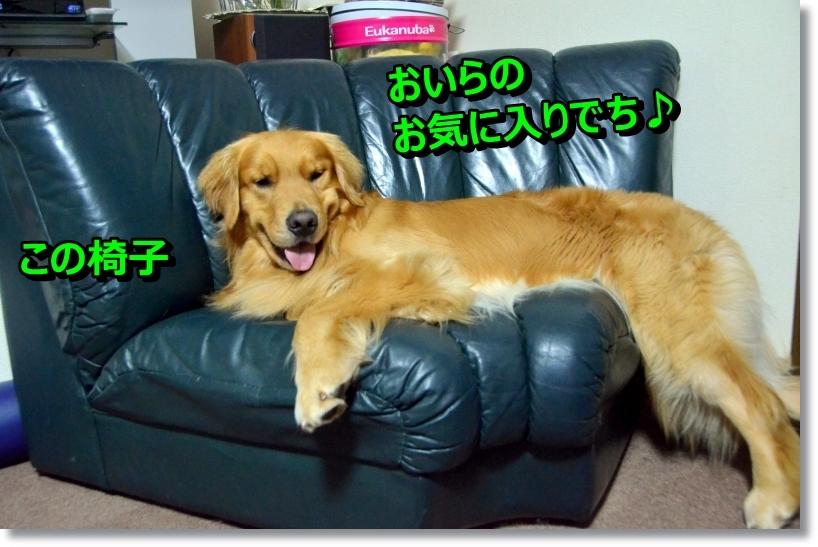 DSC_6689_20140811114425ee8.jpg