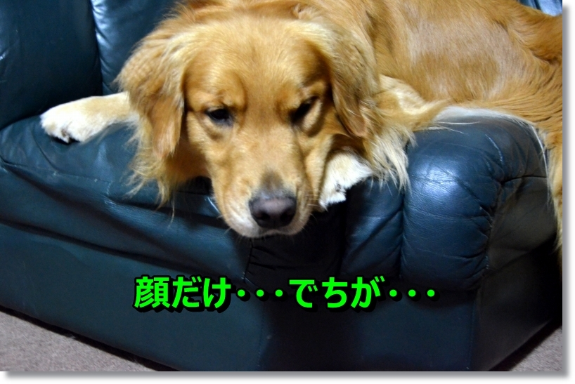 DSC_6690.jpg