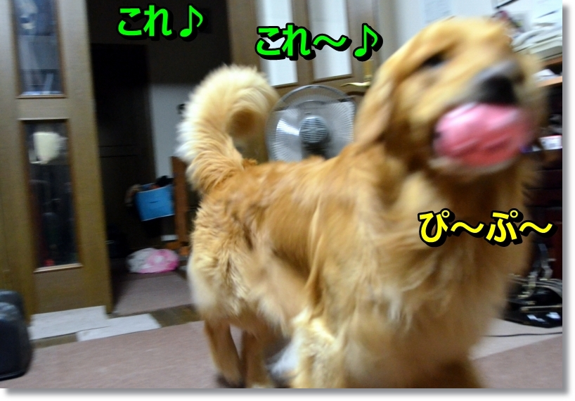 DSC_6695.jpg