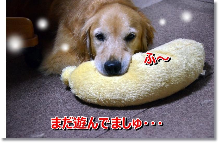 DSC_6708_20140811114502646.jpg
