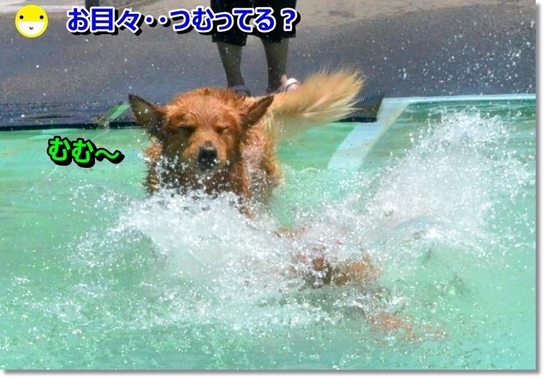 DSC_6886_201406051954109dc.jpg