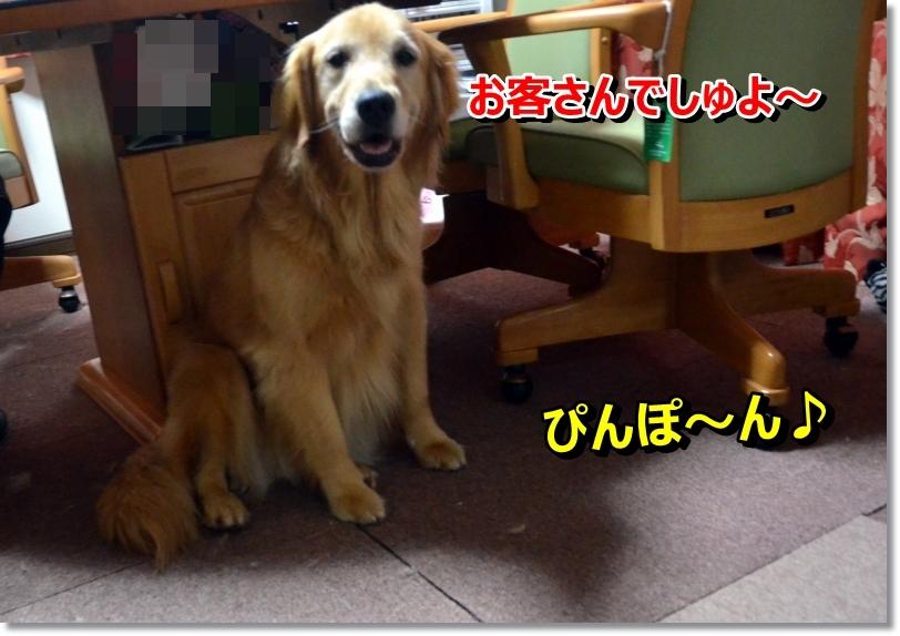 DSC_6955_20140621100625f25.jpg