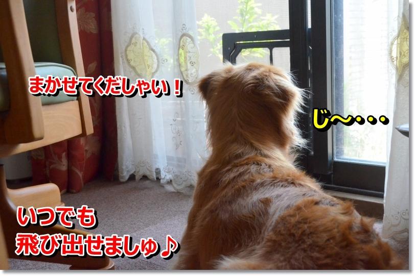 DSC_7050_201406232144372de.jpg