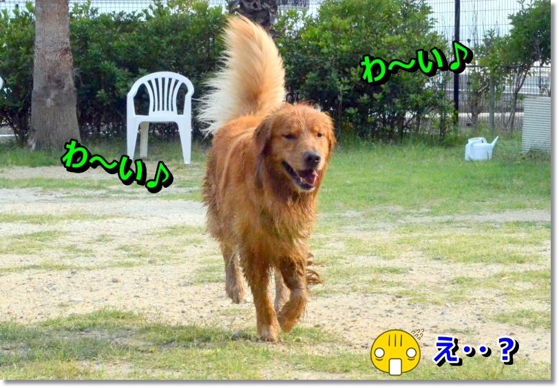 DSC_7069.jpg