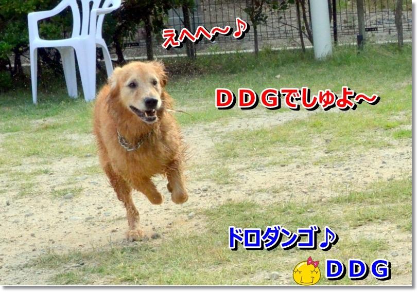 DSC_7071_20140622085631305.jpg