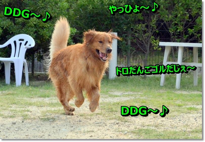 DSC_7074_20140622090321c7f.jpg
