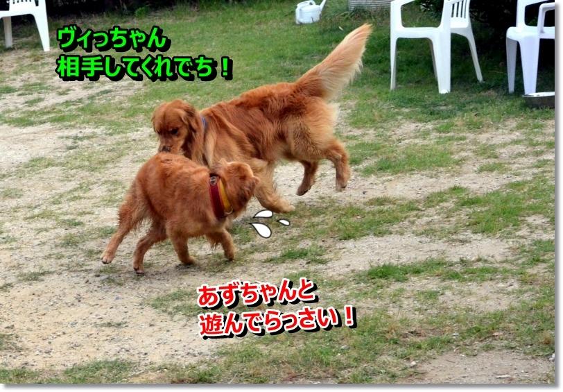 DSC_7158_20140623001512052.jpg