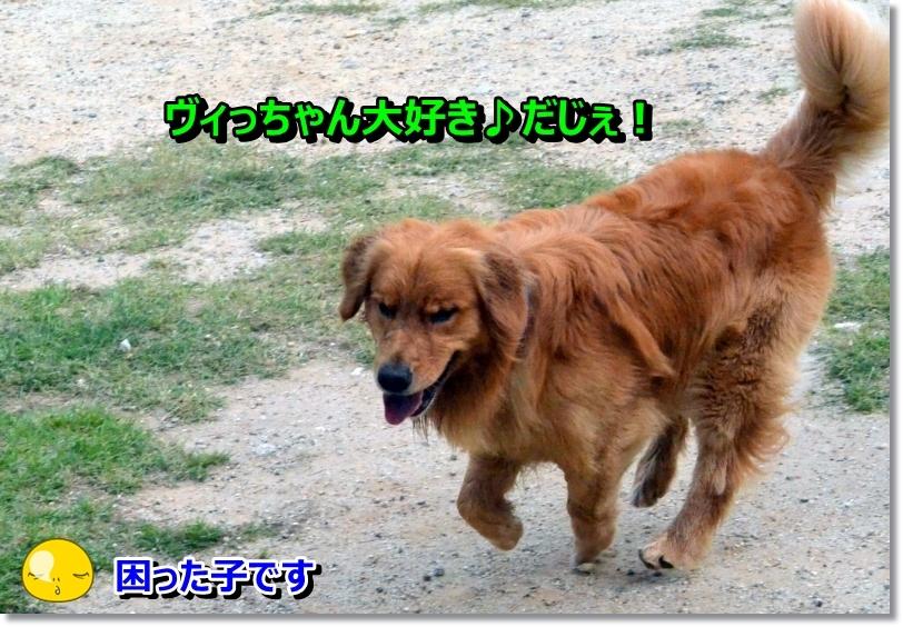 DSC_7169_20140623001537514.jpg